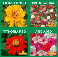 SAHAYA Flower Seeds With Instruction Guide Booklet(20 Varieties)(4190 + Seeds)- Amazon